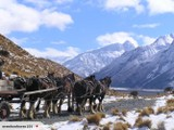 NZ High Country & Clydesdale Experience