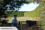 Horse Livery and Kids Lessons