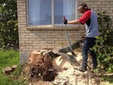 STUMP GRINDING  Auckland and Waikato