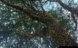 Arboricultural Contractors - Tree Work