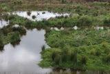 Environmental Plantings