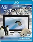 Antartica Dreaming