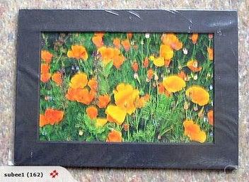 "Orange Poppies Photograph Matted ""Orange Delight"""