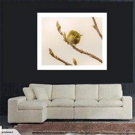 Wax-Eye / Silver-Eye Bird Nature Photo on Canvas