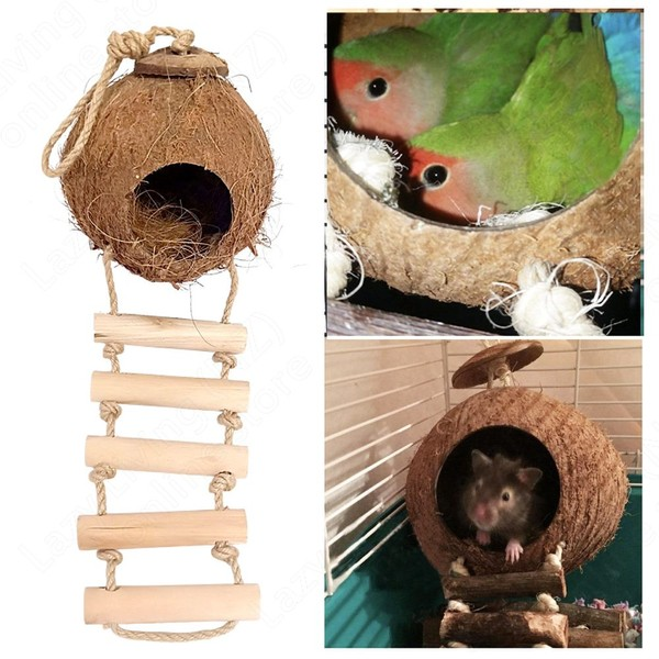 Admirable Natural Coconut Shell Bird House With Ladder Home Interior And Landscaping Ferensignezvosmurscom