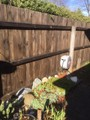 Home maintenance, paint, pest, gardening services