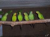 BIRD - AVIAN SPECIALIST.