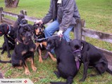 Loose Leash Dog Walking - Places Available !