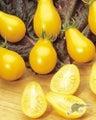 "Tomato ""Yellow Pear"" heirloom, low acid, vigourous"