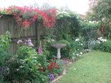 Annez Gardening