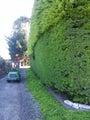 Hedge Trimming, Shelter Belt Clean Ups