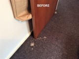 Carpet Repairs,Carpet & Upholstery Cleaning Chch