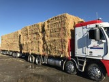 GENERAL CARTAGE. FEED SUPPLIES