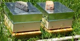 Bee Hives for Sale/Bees for Sale - Spring 2019