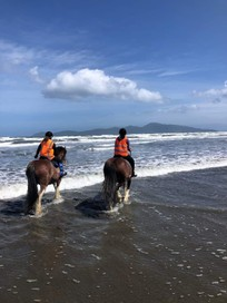 Grazing, trekking, therapy, and horse adventures