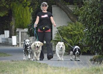 Dog Walking, Daycare & Holiday Care