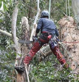 Arborists/ Tree work Baker Tree Services Ltd