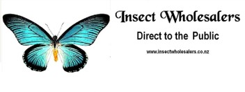 Insect Suppliers and Framers