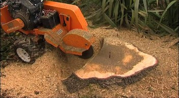 Stump Grinding , Digger Hire ( Auckland wide )
