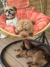 Small Paws NZ Doggie Daycare