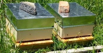 Bee Hives for Sale - Now $450, Spring $490