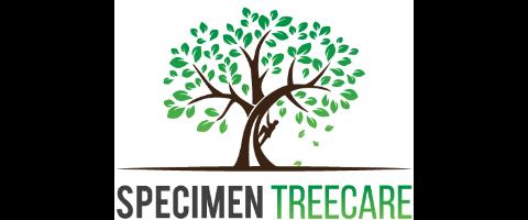 Experienced Climbing Arborist & Trainee Arborist