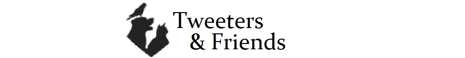 Tweeters and Friends