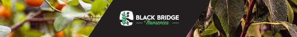 Black Bridge Nurseries